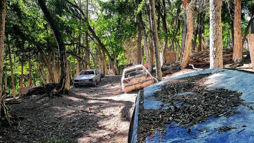 001 image woodland road 1920-1080 2021
