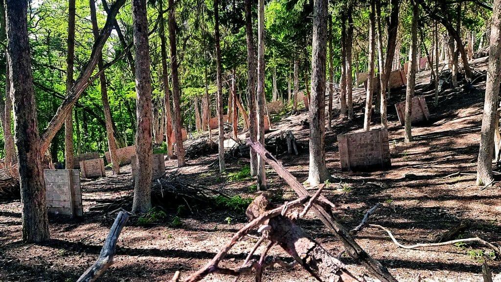 003 image woodland road 1920-1080 2021