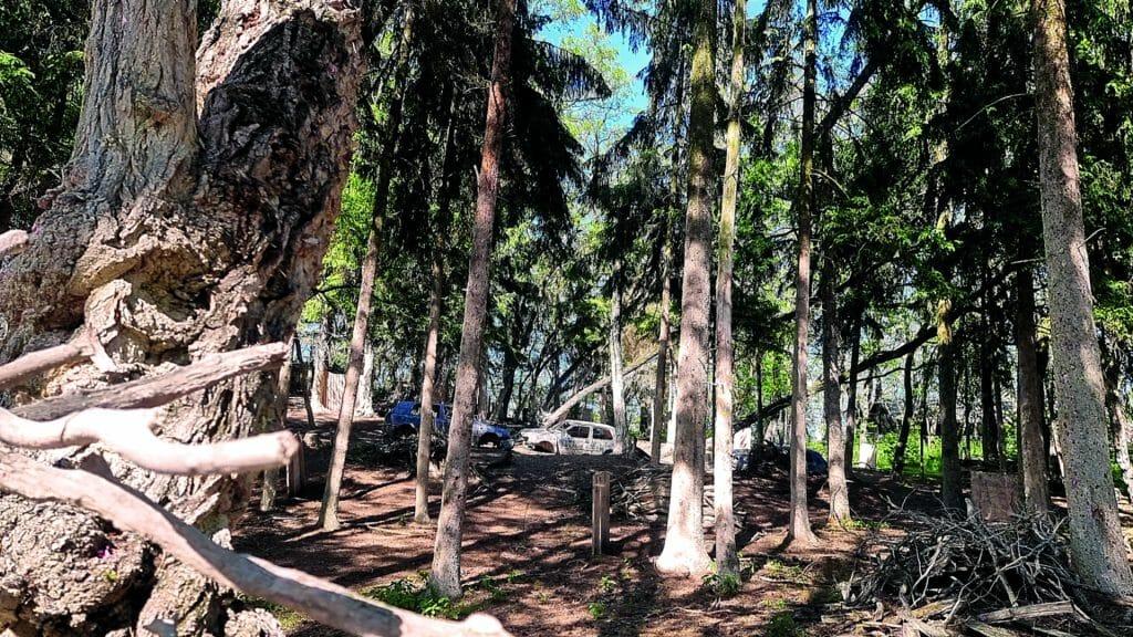 005 image woodland road 1920-1080 2021